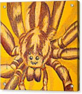 Wolf Spider Acrylic Print by Thomas Maynard