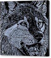 Wolfie Acrylic Print by Jim Ross
