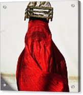 Woman Draped In Red Chadri Carries Acrylic Print by Thomas J Abercrombie
