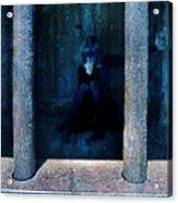 Woman In Jail Acrylic Print by Jill Battaglia
