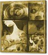Wondering 3 Acrylic Print by Angelina Vick
