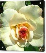 Wonderland Rose Acrylic Print