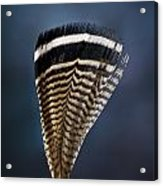 Wood Duck Feather Acrylic Print
