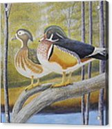 Wood Duck Pair At The Lake Acrylic Print