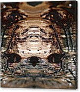 Wood Hermit At Fox Park Acrylic Print