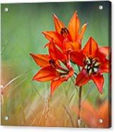Wood Lily Acrylic Print