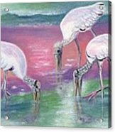 Wood Stork Family At Sunset Acrylic Print