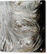 Wooden Fingerprint Eddies In The Grain Of An Old Log Like Whorls On A Finger Acrylic Print