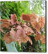 Wooden Hydrangea Acrylic Print