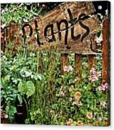 Wooden Plant Sign In Flowers Acrylic Print
