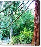 Woodland And Huge Tree Illustration Acrylic Print