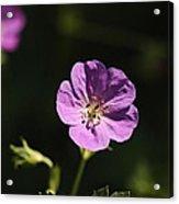 Woodland Blooms Acrylic Print