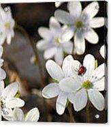 Woodland Flora And Friend Acrylic Print