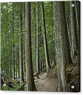 Woodland Forest Path Acrylic Print