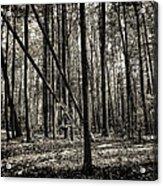 Woodland Acrylic Print