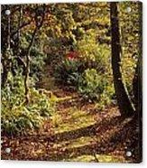 Woodland Path, Mount Stewart, Ards Acrylic Print