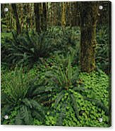 Woodland Rain Forest View With Mosses Acrylic Print by Melissa Farlow