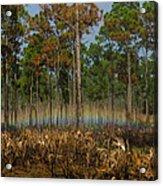 Woodland Rainbow Acrylic Print