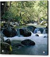 Woodland View Of A Small Creek Flowing Acrylic Print
