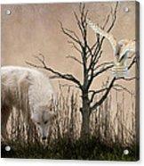 Woodland Wolf Acrylic Print