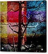 Woodpecker Home Acrylic Print