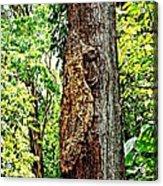 Woodpecker Tree Acrylic Print
