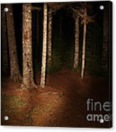 Woods At Night Acrylic Print