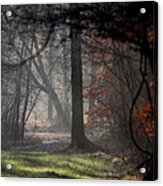Woods - Dirt Road Photo - The Quiet Place Acrylic Print