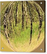 Woods In Crystal Ball Acrylic Print