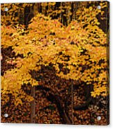 Woods Of Yellow Acrylic Print