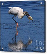 Woodstork Catches Fish Acrylic Print