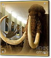 Wooly Mammoth Acrylic Print