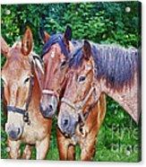 Work Horse Trio Acrylic Print