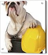 Working Like A Dog Acrylic Print