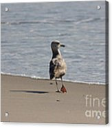 Wounded Bird 6 Hurt Tired Calm Ocean Beach Photos Pictures Bird Seagulls Oceanview Beaches Water Sea Acrylic Print by Pictures HDR