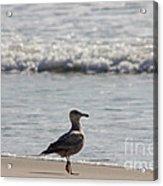 Wounded Seagull 3 Hurt Standing On One Leg Beach Photograph Art Seascape Bird Birds Beaches Sea Pics Acrylic Print