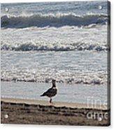Wounded Seagull 4 Seagulls Birds Photos Beach Beaches Sea Ocean Oceanview Scenic Seaview Art Pics Acrylic Print