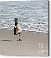 Wounded Seagull 5 Seagulls Bird Beach Beaches Ocean Photos Pictures Art Photography Photograph Image Acrylic Print