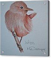 Wren Acrylic Print