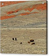 Wyoming Red Cliffs And Buffalo Acrylic Print