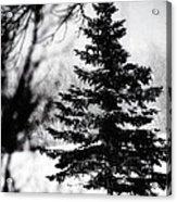 X-mas Tree Acrylic Print