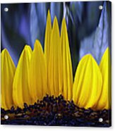 Florida's State Wildflower Acrylic Print