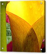 Yellow Abstract Acrylic Print