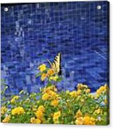 Yellow Against Blue Acrylic Print