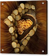 Yellow And Orange Anemone Mouth, Sabah Acrylic Print