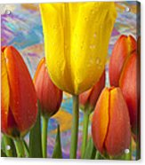 Yellow And Orange Tulips Acrylic Print