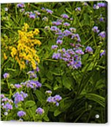 Yellow And Violet Flowers Acrylic Print