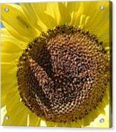 Yellow Autumn Sunflower Acrylic Print
