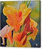 Yellow Canna Acrylic Print by Cynthia Sexton