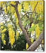 Yellow Cascades Acrylic Print